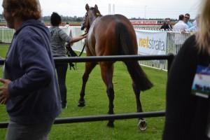 Netstrata-Horse-300x200