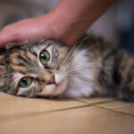 It's Now Easier to Have a Pet in a Strata Scheme